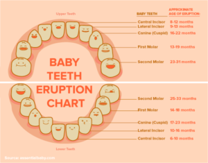 15021 Social Blog Graphic - Baby Teeth Chart